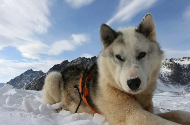 dog-sled-1